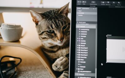What Do Great Sales Leaders and Cats Have in Common? (Part 3 of 4)