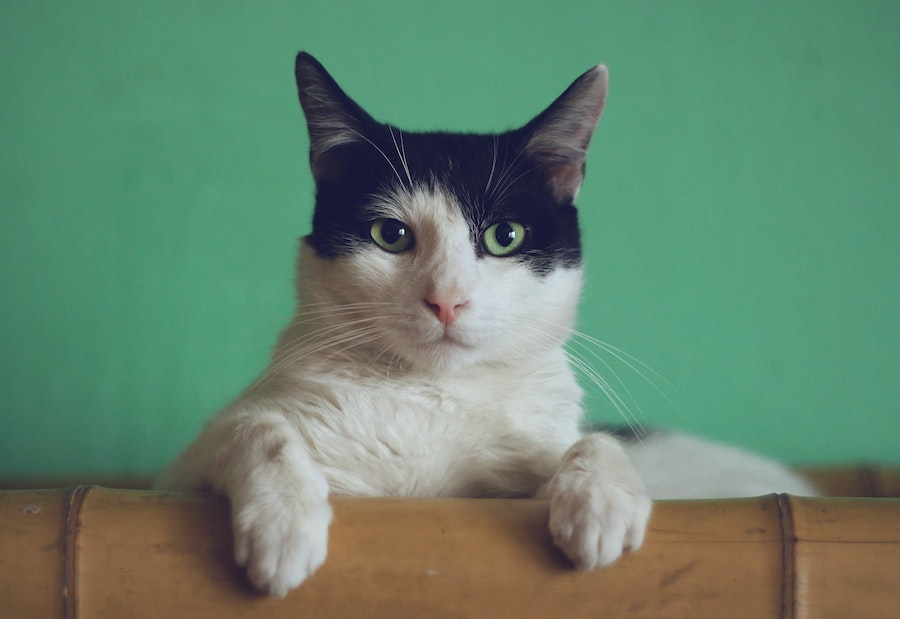 What Do Great Sales Leaders and Cats Have in Common? (Part 1 of 4)