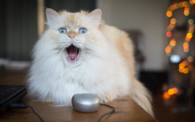 What Do Great Sales Leaders and Cats Have in Common? (Part 4 of 4)